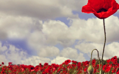 Thank you to those attempting to cut-down tall poppies